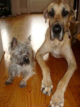 Dante and Mia